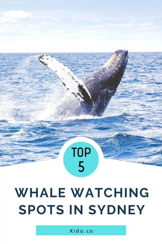 Top Spots Whale Watching Cruises On Land Sydney Location Travel Kids Guide Featured